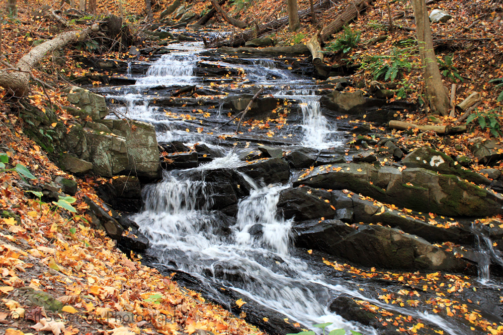 Scenic Hudson's Falling Waters Preserve, Glasco, New York